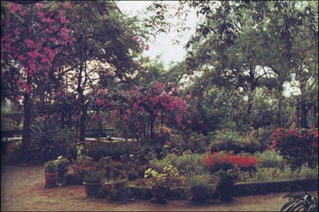 Mehera's Garden